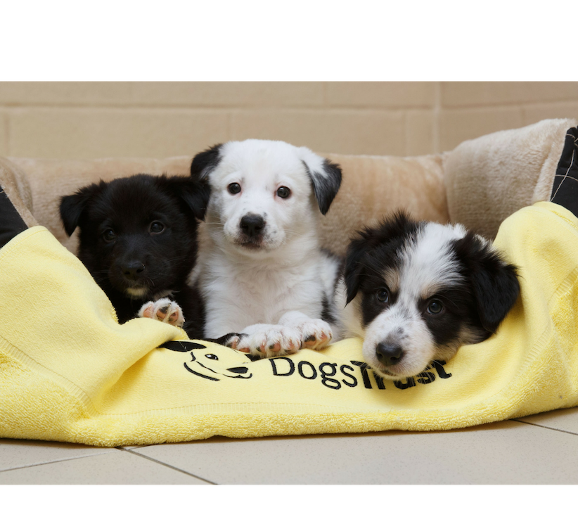 Dog Rescue & Rehoming Charity | Dogs Trust