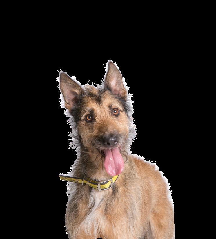 Dog images · Pexels · Free Stock Photos | 822x745
