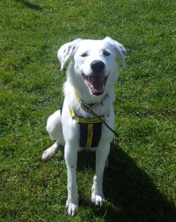 Guide Dog Rehoming >> Dogs and Puppies for rehoming | Dogs Trust