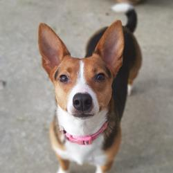 Picture of LADYTERRIER
