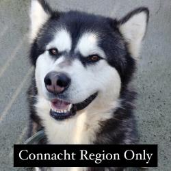 Picture of ROXYCONNACHT